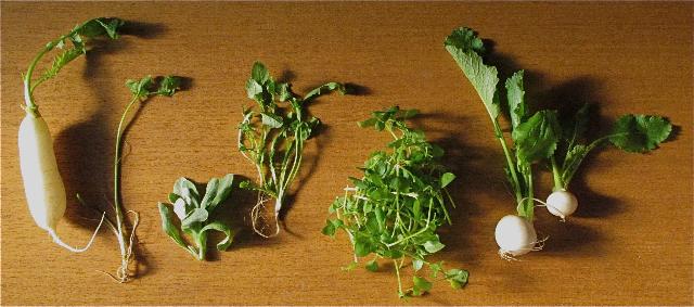 7kusa1 © Tokyo Food File