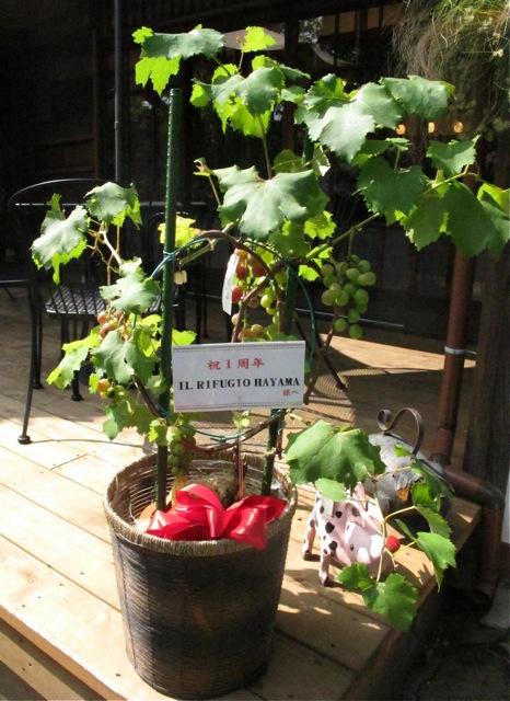 Il Rifugio vine (C) Tokyo Food File