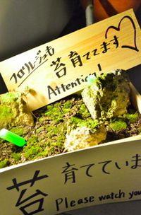 Den5th moss2 © Tokyo Food File