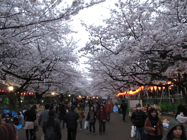 Ueno hanami 1 © Tokyo Food File