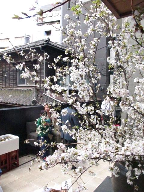 Nakamura hanami © Tokyo Food File