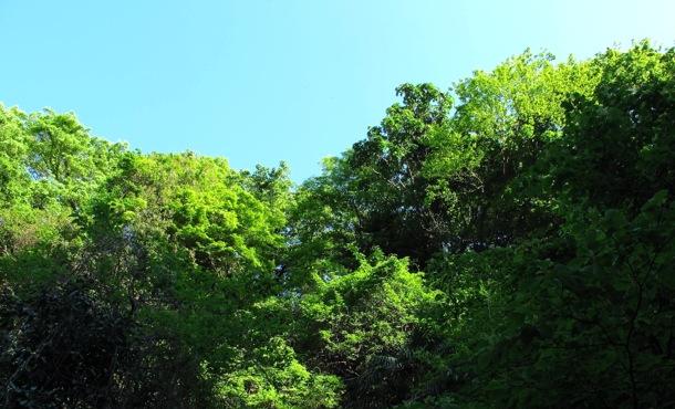 foliage © Tokyo Food File