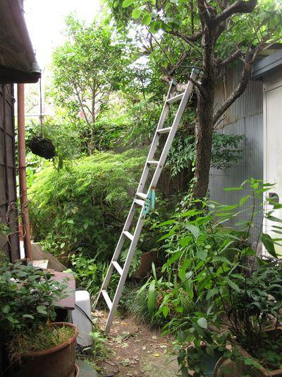 Ume ladder © Tokyo Food File
