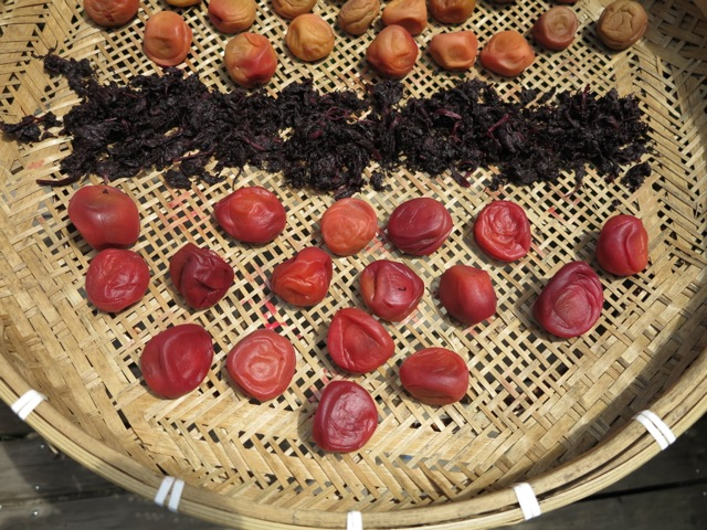 umeboshi day1 drying © Tokyo Food File