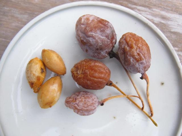 ginnan fruit © Tokyo Food File