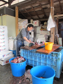 fishmarket buri © Tokyo Food File