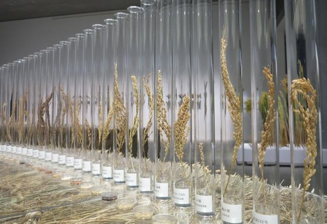Kome rice testubes © Tokyo Food File
