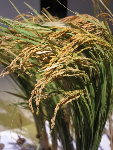 Kome rice © Tokyo Food File