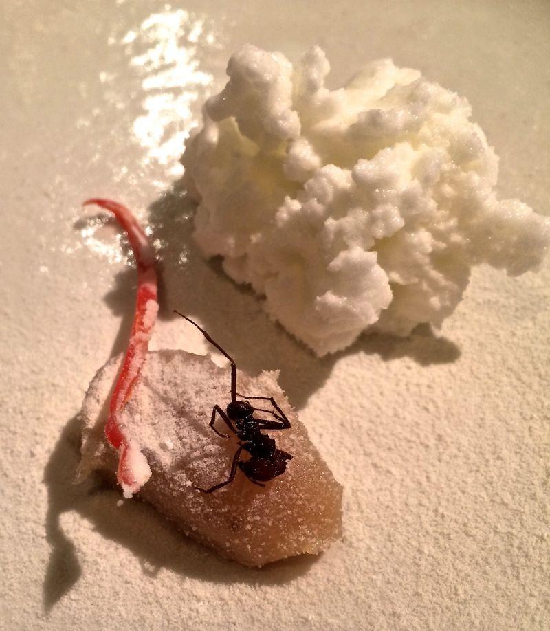 Alex ant © Tokyo Food File
